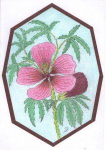 05.hibiscus