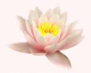 ananda lotus - Ananda yoga centrum -Ellecom