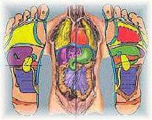 voetreflex massage de structuur en ligging van de organen van lichaam en voet