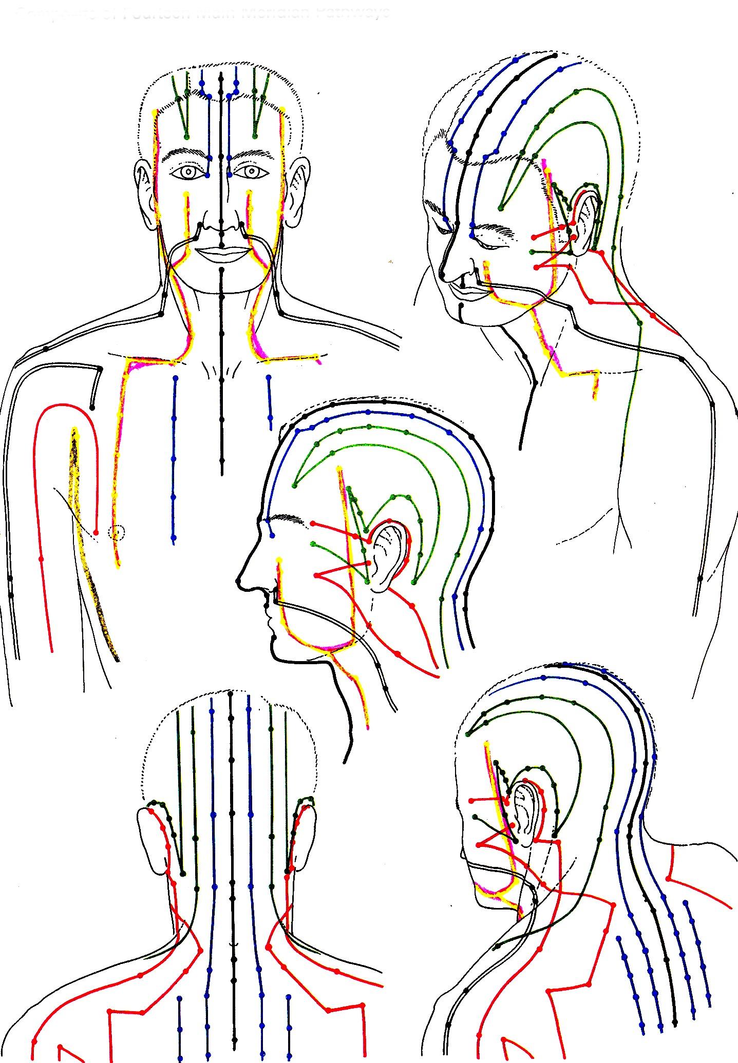 meridianen hoofd/schouder overzicht