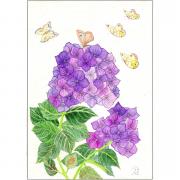 Hortensia met vlinders,bloemen tekeningen , intuïtief tekenenen